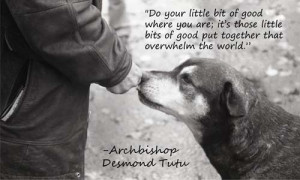 Related Pictures desmond tutu gives advice