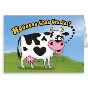 Funny MooooChas Gracias Cow Thank You Card