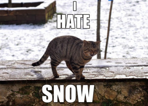 Funny Hate Snow Quotes