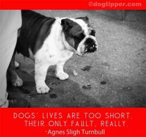 Dog Loss Quotes Dog quotes: sad quotes, loss,
