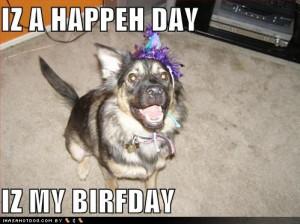 happy birthday dog funny happy birthday dogs funny happy birthday dogs