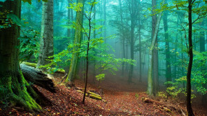 Forest Fog   1920 x 1080   Download   Close