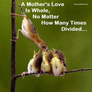 Mothers Love Quotes-Cute birds-Nice Click