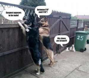 Police Dogs – funny pictures – funny photos – funny images ...