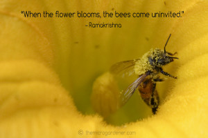 When the flower blooms the bees come uninvited quote