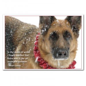 German Shepard Dog in snowstorm photo new years card with Albert Camus ...