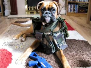Mean Boxer Dog Boxer dog mean face