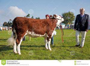 livestock-judge-newbury-uk-september-paraded-show-ring-judges-to-make ...