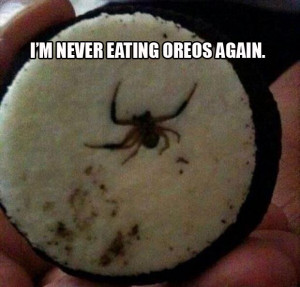 Funny Pictures to Make You Laugh So Hard You'll Cry