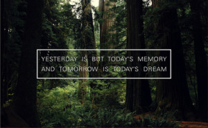 forest, quote, text, today, tomorrow