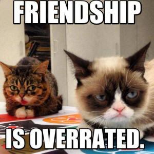 ... Meet-The-Godfather-Of-Internet-Celebrity-Cats--Tard-The-Grumpy-Cat.00x