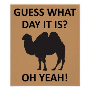 Hump Day Camel Funny Wednesday Poster Sign