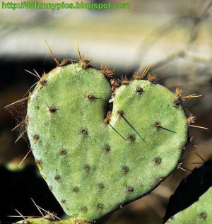 The Nature beauty the heart cactus Amazing ^_^