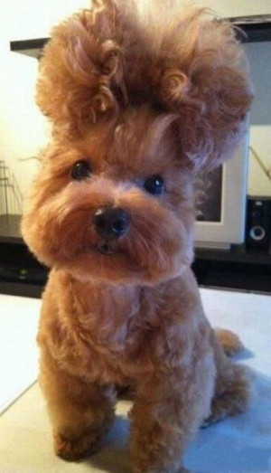 My Dogs Crazy Hair - Return to Funny Animal Pictures Home Page