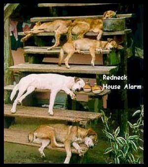 hotdog -redneck cat carrier -redneck wind chime -redneck house alarm