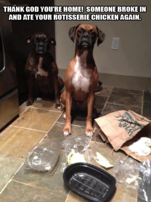 Funny dog hungry in the Kitchen