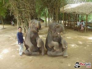 Baby Elephants Cute Funny