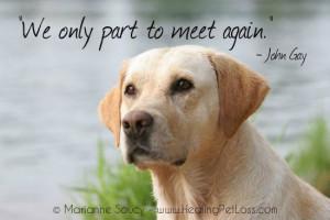 saying goodbye to your pet http healingpetloss com healing pet loss ...