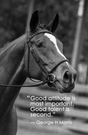 Horse Quotes About Life This past horse show was a