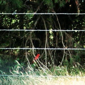 Here he is hiding in the trees. I love telephoto lens. #birds # ...