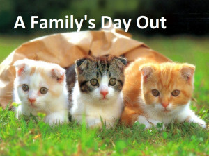 cute kittens with funny sayings funny sayings iii funny