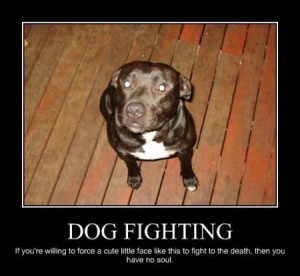Funny dog fight pictures
