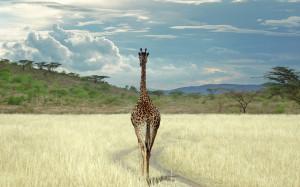 Endangered African safari animals pic by Steve Fujinaka , My Shot