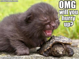 cute kitten cute baby turtle what is not to love it was sent to me on ...
