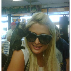 Celebrity twitter pictures: Paris Hilton posted this picture of her at ...