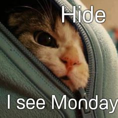 ... Monday funny quotes kitten monday days of the week humor monday quotes