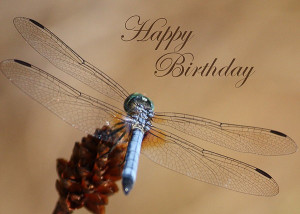 Dragonfly Birthday Card...