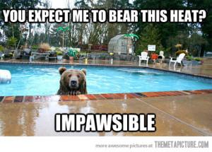 funny bear swimming pool