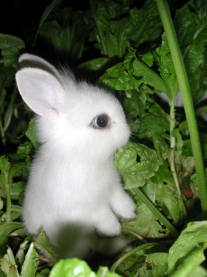 ... 20 cute bunny pictures part 2 cute bunny pictures that will to make