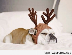 Grumpy Reindeer dog - Funny Pictures, Funny Quotes, Funny Memes, Funny ...