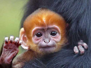Cutest Baby Animal Photos of 2012