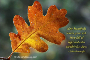 How beautiful the leaves grow old. How full of light and color are ...