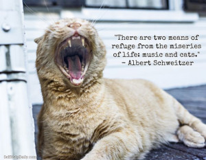 Quote About Cats and Life