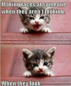 Cute Animals With Funny Sayingsfunny Animals With Funny Sayings Kid ...