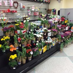 Safeway - Nicely stocked plant section - Aiea, HI, United States