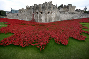 Tower of London London Poppies