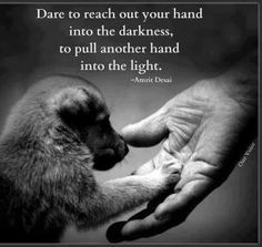Stop animal abuse More