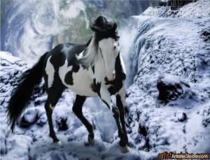 Beautiful-Horse