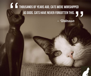 Your cat knows she was meant for royalty and beyond. She'll spend her ...