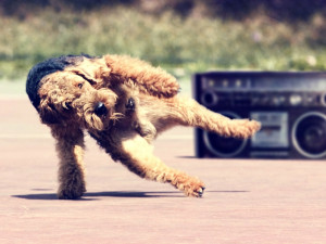 Animals Dogs Funny Dancing Computer Hd Screensavers
