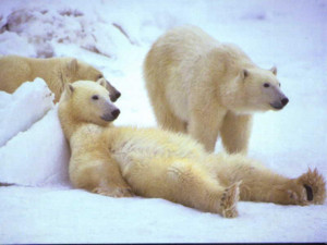 Impacts of Climatic Change on Arctic Wildlife