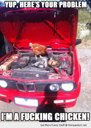 chicken animal mechanic yup your problem bird car fixing funny pics ...