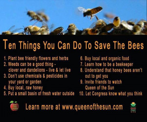 Save the Honey Bee - becoming a beekeeper is a little bit of a stretch ...