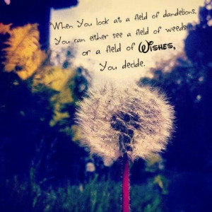Dandelion. Quotes. Wishes. Photography.