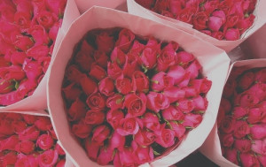floral, flowers, photography, pink, roses