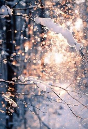 New Snow Bokeh Light Outdoors Nature Winter Sun Snow